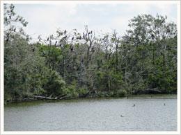zona zur flora fauna:
